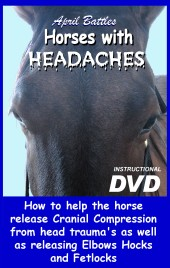 Horses With Headaches